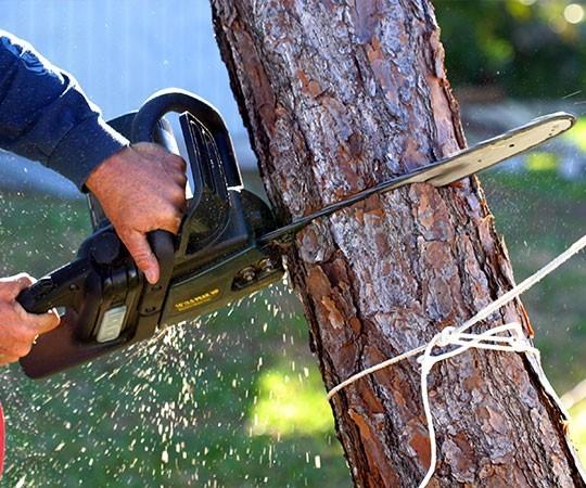 Спил деревьев в Омске и Омской области