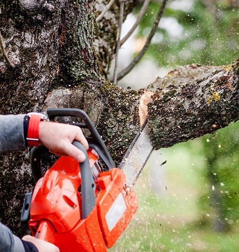 Услуга по спиливанию деревьев в Омске